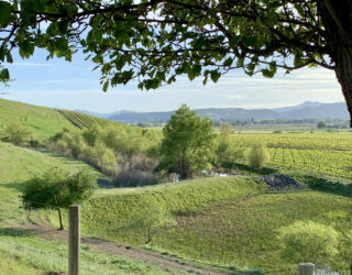 California State Water Resources Control Board Adopts New Order Establishing Statewide Waste Discharge Requirements for Wineries